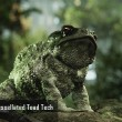 All obey the mighty Tessellated Toad!